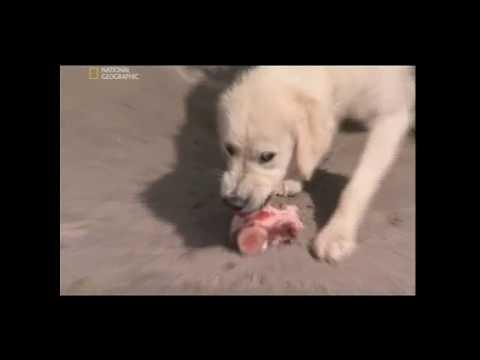 Znalec psej duše - Skutočný hlad