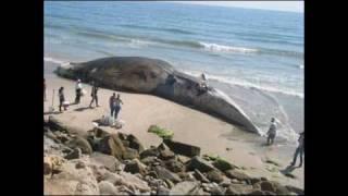 World's Biggest Animals