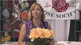 Flower Garden Tips : How To Care For Long Stem Roses