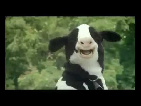 Quảng Cáo Vinamilk hài hước - Chú bò cười ngất ngây (HD)