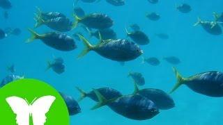 Conocimiento del medio: Los anfibios y los peces
