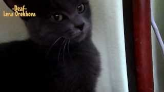 Shy cat Barney