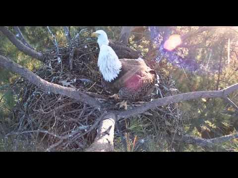 Berry College Eagles November 1 2013 Nest Visit Youtube