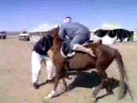 Lawak arab naik kuda