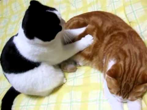 massage chinois de chats Lol Cat