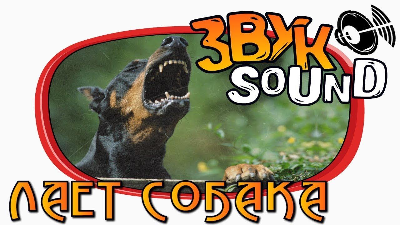 Скачать бесплатно звуки лая собак