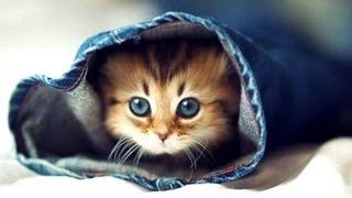 Cute Kittens Make You Smarter