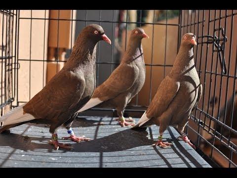 2014 Breeders
