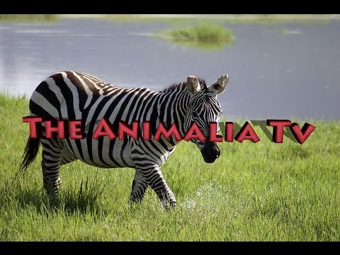 Weekly Animal News Ep 1: Spiders eating fish and more ..