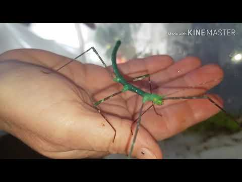 Bramble collecting and fun and games with the stick insects