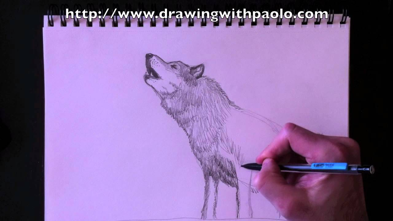 dessiner un loup avec paolo morrone youtube. Black Bedroom Furniture Sets. Home Design Ideas