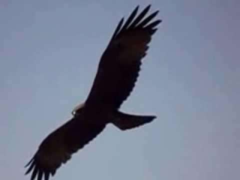 South Sudan Air Attack