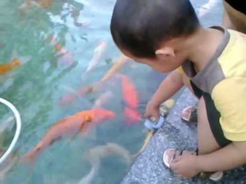 Amazing fish feeding In China
