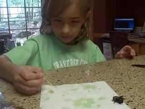 This Little Girl Has A Little Pet Bee