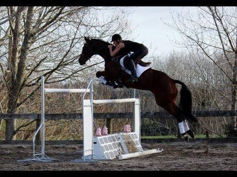 Horse jumping upto 1.60- Classic Crusader and Classic Goldrush