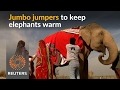 Elephants in northern India get jumbo jumpers to stay warm