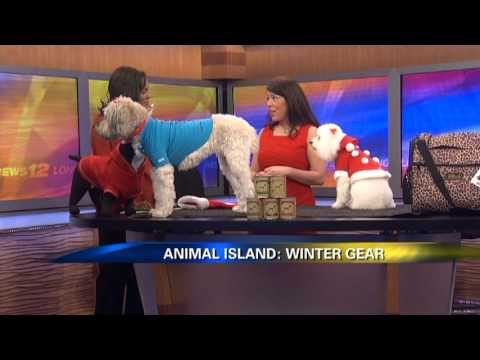 0 News 12 Animal Island Whats Hot for Christmas for Your Pets with Dana Humphrey