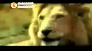 [Telefood] Video