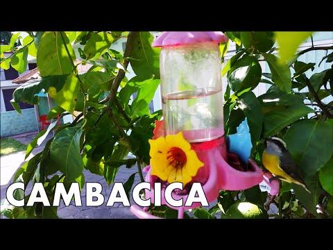 CAMBACICA