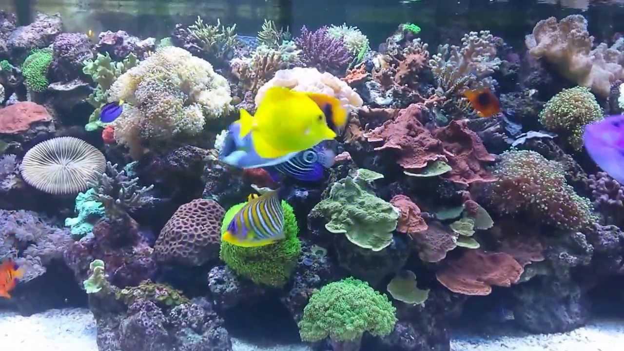 Saltwater aquarium tropical fish youtube for Saltwater tropical fish