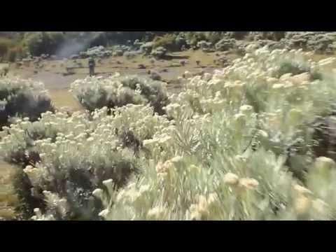 Lembah Kasih Mandalawangi, Taman Nasional Gunung Gede Pangrango, Wolf Northwest Adventure Team.