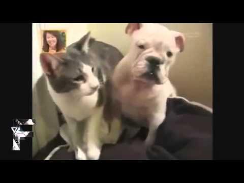 Videos engraçados, Gatos x Cachorros o eterno UFC animal