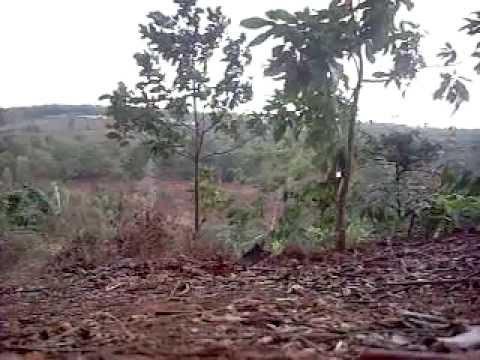 bầy gà rừng thiên 8 (mỹ nhân giật mình, anh hùng bỏ chạy)