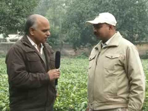 Fruit-Vegetable Processing (Doordarshan Kendra Varanasi (DDK Vns)