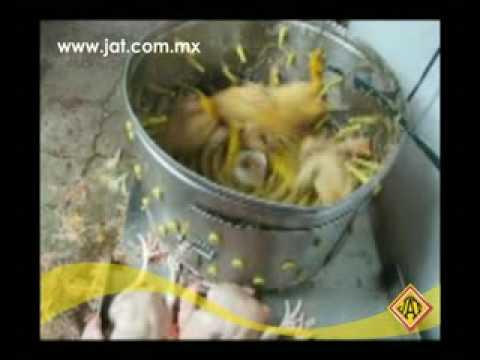 Desplumadora 4 pollos Sistemas Agropecuarios JAT