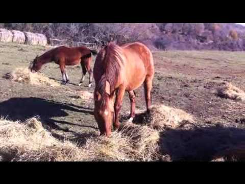 Video Livery for pregnant mares Autor: Imgagen Miniatura Youtube