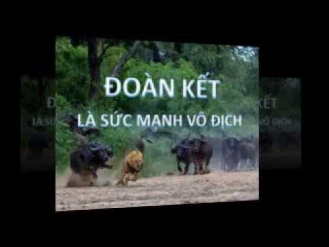 Luật rừng xuất hiện tại Hà nội Việt nam Chuyện không có gì lạ ?