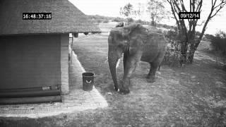Gajah ini tertangkap kamera cctv sedang membuang sampah pada tempatnya