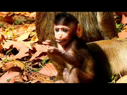 Funny Attitude Of Baby Learns To Test Food But Many Times Test Is Tree Leafs