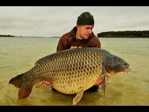 My dream - Johny Collet (JET FISH)