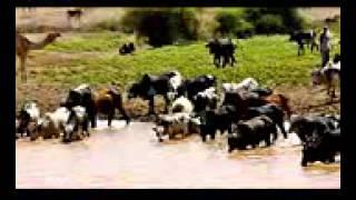 Gualzom Abeyti - Aynifakakey Nitehalale ኣይንፋላለ ንተሓላለ (Tigrigna)