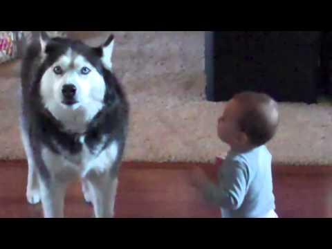 Pes imituje dítě. Skvělé :D