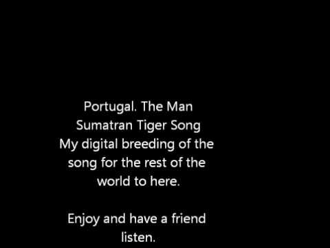 Sumatran Tiger - Portugal. The Man - Breed the song