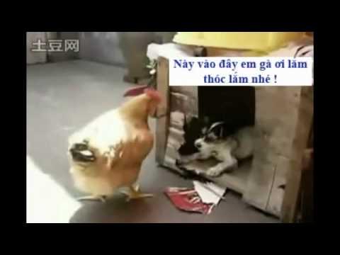 Chết cười vì chó với mèo