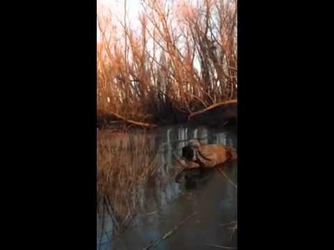 Другарот ловџија заглавил во безизлезна ситуација на мразот