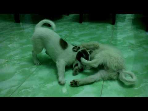 Trận chiến không hồi kết của những chú chó siêu dễ thương