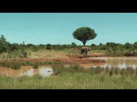 Water hole at Kisima, Kenya. Elephant appears at the water hole