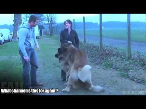 Perturber l'accouplement des chiens interview
