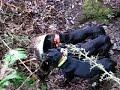 Bear Caught In Culvert