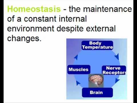 Homeostasis Diagram Temperature