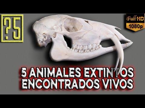 Taxón Lázaro: 5 Animales Extintos encontrados vivos [Misterios del mundo 2015]