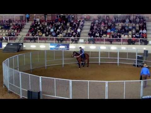 Monty Roberts - 'Dirty Starter' - Day 2 Ride - Horseworld, Sydney