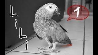 Lili, Notre Perroquet Qui Parle Septembre 2013 (Sous
