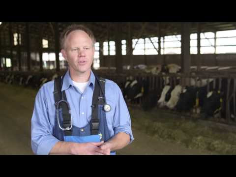 How Dairy Farms Judiciously Use Antibiotics