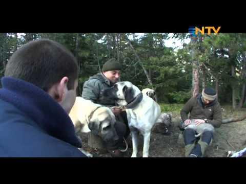 Doğada Tek Başına - Dağ Evi 2. Bölüm (15.02.2012)