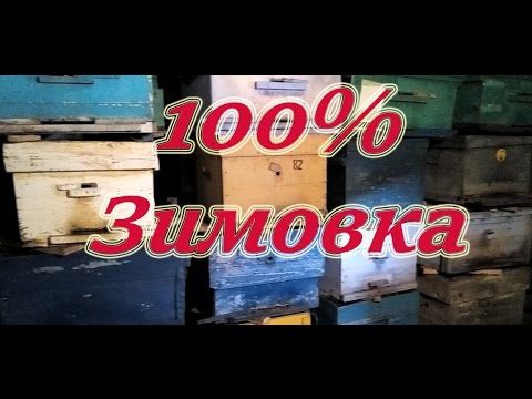 Лучший 100% результат зимовки в надземном зимовнике пчелосемей Карники F1 Пешец. Beekeeping.